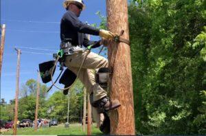 Best Tree Climbing Spikes