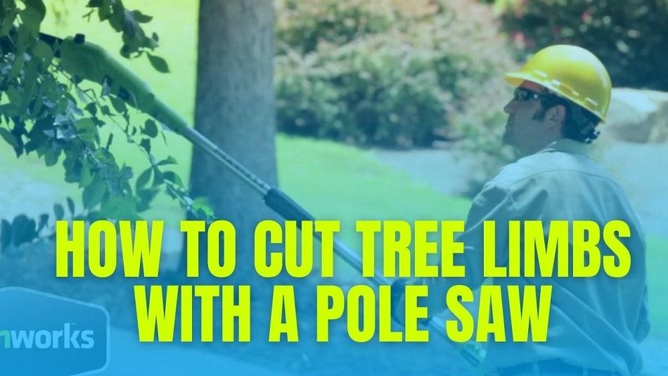 How To Cut Tree Limbs With A Pole Saw